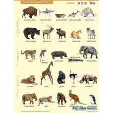 Tanulói munkalap, A4, STIEFEL' Vadon élő állatok'
